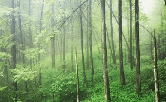 chengdu-expat-forest