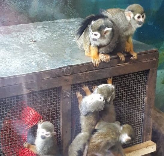 Chengdu Zoo is keeping out the cold | Chengdu Expat News